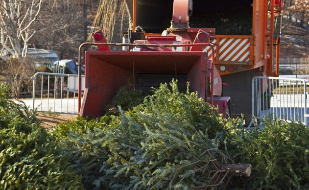 christmas-tree-recycling-center-2
