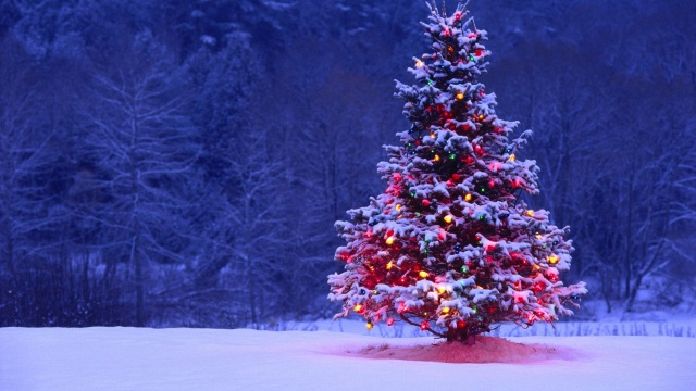 Free-Wallpaper-Christmas-Tree