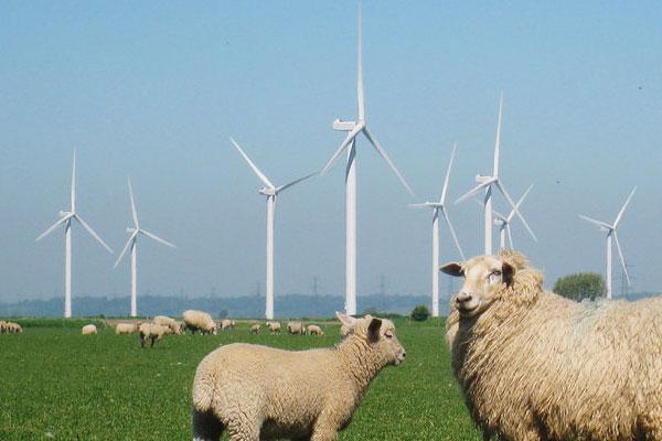 farm-wind